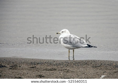A seagull stands in water on the shore in Coeur d'Alene, Idaho