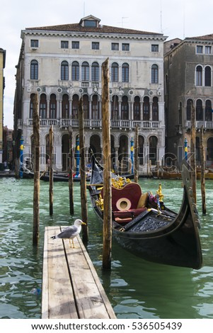 A seagull wants to ride a gondola in grand canal, Venice