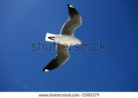 A seagulls flying in the sky