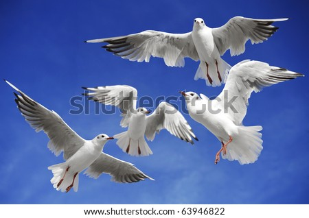 A seagulls soaring in the blue sky - stock photo