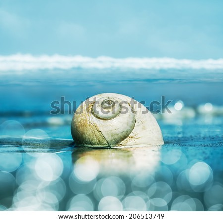 A seascape featuring a moon snail shell with shallow depth of field.  Image is toned cyan and blue with bokeh light effects.   - stock photo