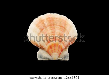 a seashell isolated on black