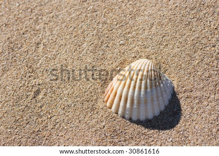 A seashell on beach sand