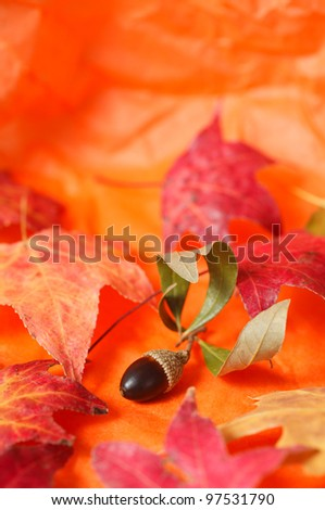 A seasonal arrangement with an acorn and maple leaves with an orange paper  background. - stock photo