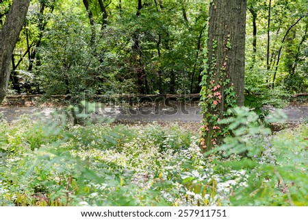 A secret path through all the vegetation at Central Park, New York City, New York, USA. - stock photo