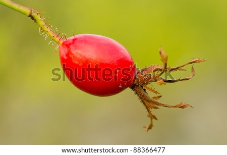 A seed of an Hibiscus - stock photo