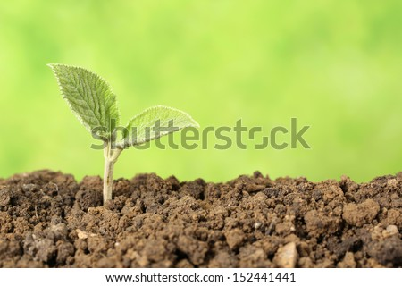 A seedling is growing in the dirt, concept beginning of a new life