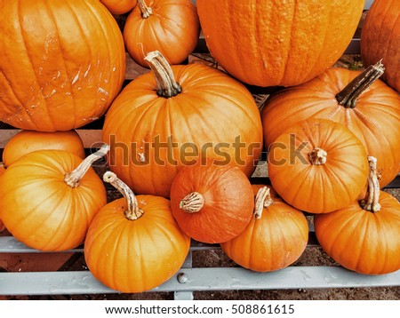 A selection of newly harvested pumpkins for Halloween