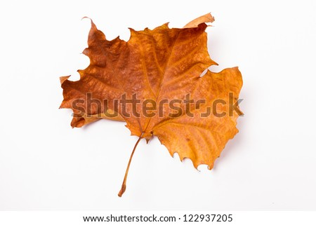 A sere leaf, put on a white background - stock photo