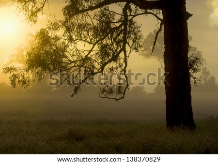 A serene Australian meadow with trees silhouetted on a misty morning - stock photo