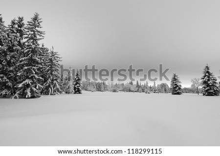 A serene winter landscape with trees covered in snow after a major snowfall