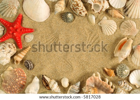 A series of seashells scattered around the sand to make a frame.