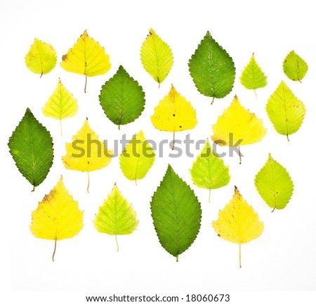 a set colorful autumn leaves - stock photo