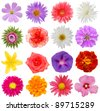 A set of assorted blooms style - stock photo