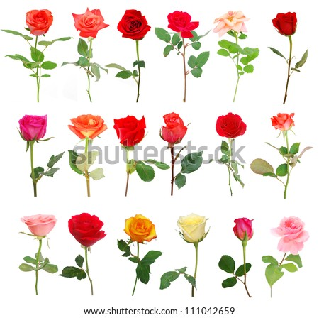 A set of assorted roses