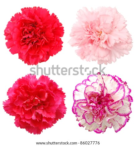 A set of carnation flowers - stock photo