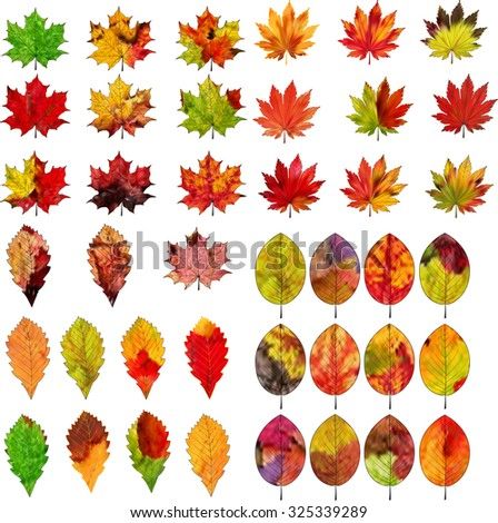 A set of colorful autumn leaves on a white background. - stock photo