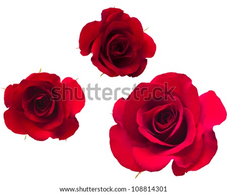 A set of flower of roses. Isolated on white. - stock photo