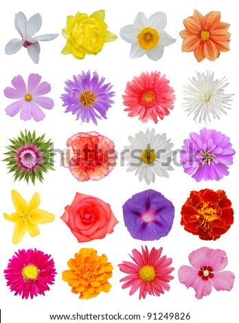 A set of isolated spring blooms