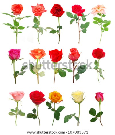 A set of roses in gift