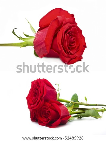 a set of roses isolated on white