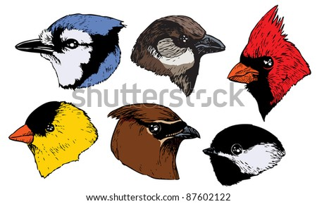 A set of six realistic ink songbird heads in a profile view. Raster. - stock photo