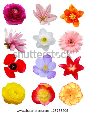 A set of Spring open flowers - stock photo