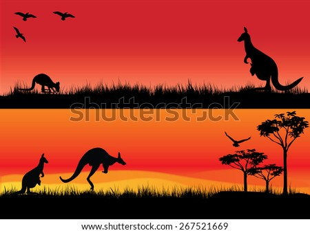 a set of two illustrations with australian kangaroos in the sunset - stock photo