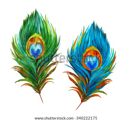 a set of two watercolor peacock feathers. accurate illustration, vintage style.