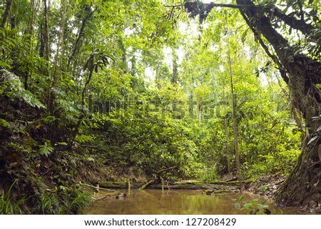 A shady rainforest stream in the Ecuadorian Amazon