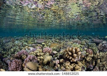 A shallow coral reef grows near a lush, uninhabited island in Marovo Lagoon, Solomon Islands.  This region is extremely diverse in terms of marine life. - stock photo