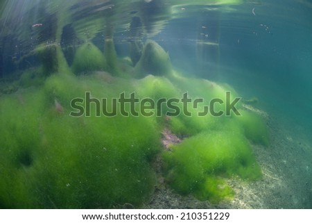 A shallow marine lake in Raja Ampat, Indonesia is home to a carpet of luminescent-green algae. Marine lakes are saltwater lakes often formed in limestone islands. - stock photo
