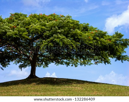 a shapely tree provides shade up on a hill - stock photo