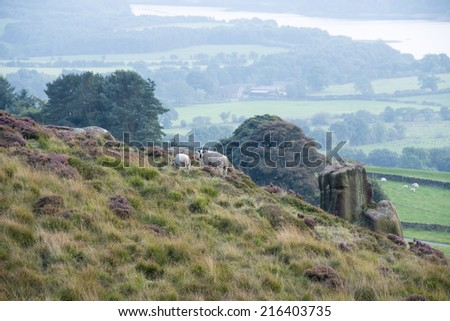 A sheep and lamb graze on the hillside of Views the roaches, Staffordshire, England - stock photo