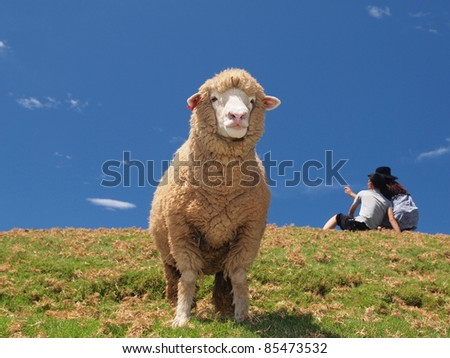 a sheep's dream - stock photo