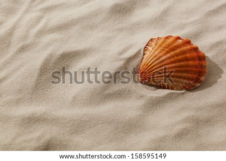 a shell is in the sand of a beach. desire for fair and recreation. - stock photo