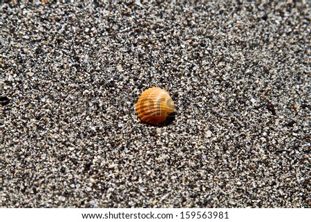 a shell is in the sand of a beach. desire for fair and recreation. Tenerife. Canary Island - stock photo