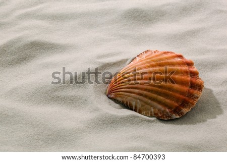 a shell is in the sand on the beach. vacation and holidays at sea. - stock photo