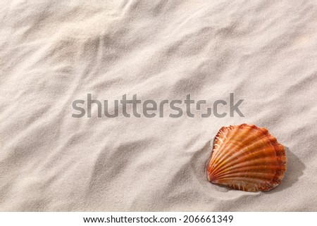 a shell lies on a sandy beach. desire for fair and recreation. - stock photo