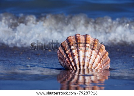 A shell lies on the sandy beach next to the sea. Beautiful memories of the last holiday. - stock photo