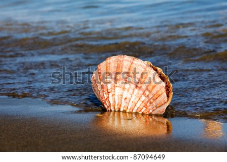 a shell lies on the sandy beach next to the sea. beautiful memories of your last vacation. - stock photo