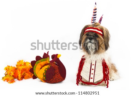 A Shih Tzu, dressed in an Indian chest plate with a head band and feathers, sits beside a stuffed turkey. - stock photo