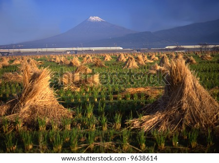 A Shinkansen runs between Mt. Fuji and a rice field - stock photo