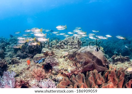 A shoal of fish swims over a tropical coral reef - stock photo