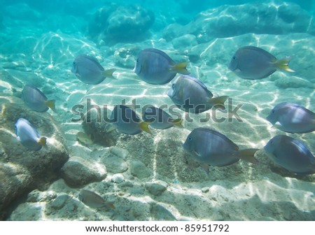 A shoal of fishes in Caribbean Sea, Mexico - stock photo
