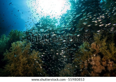 a shoal of silvery fish. In the background the sun's rays penetrate the sea - stock photo