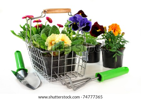 a shopping basket with different balcony plants