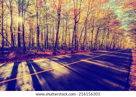 A shot by a rural road with colorful treed landscape on either side during the autumn season.  Filtered for a vintage retro look.  - stock photo