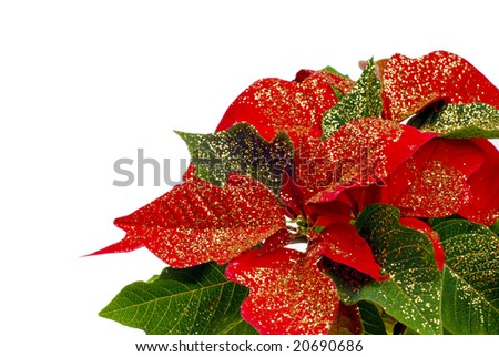 a shot of a decorated poinsetta - stock photo