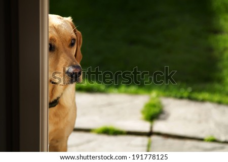 A shot of a dog looking round corner